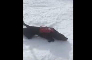 Собакен делать крутейший слайд с горы