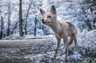 Чернобыль в инфракрасном объективе минского фотографа: фото как из фильма