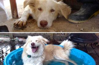 Топ-10 собак до и после: доставайте носовые платки