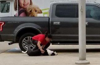 Собаки легли на асфальт, умоляя владельцев не отдавать их в приют для усыпления