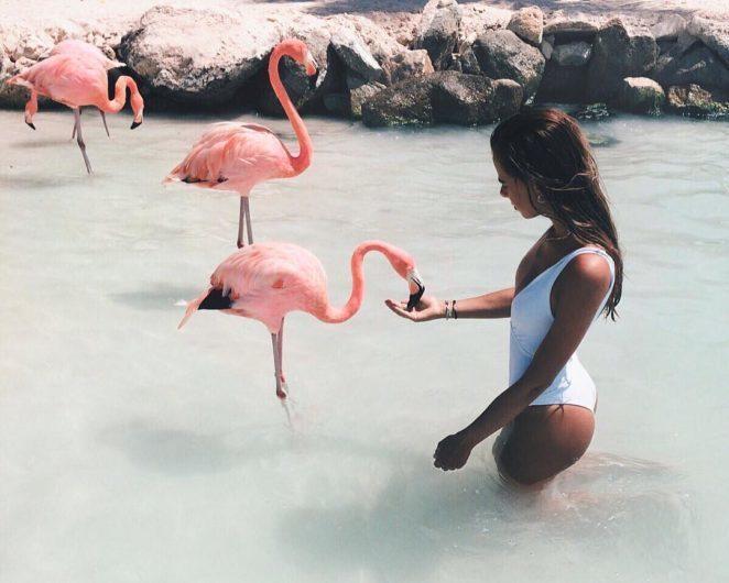 Работа мечты: присматривать на Багамах за фламинго
