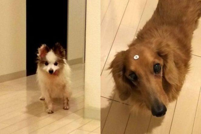 Японец снимает прикольные видео своих двух собак: это лучшее, что вы можете увидеть сегодня
