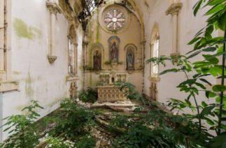 Фотограф снимает заброшенные места по всему миру: мировое господство растений совсем не шутка